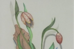 fein_flower in the garden_colored pencil