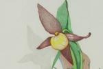 fein_planting 2